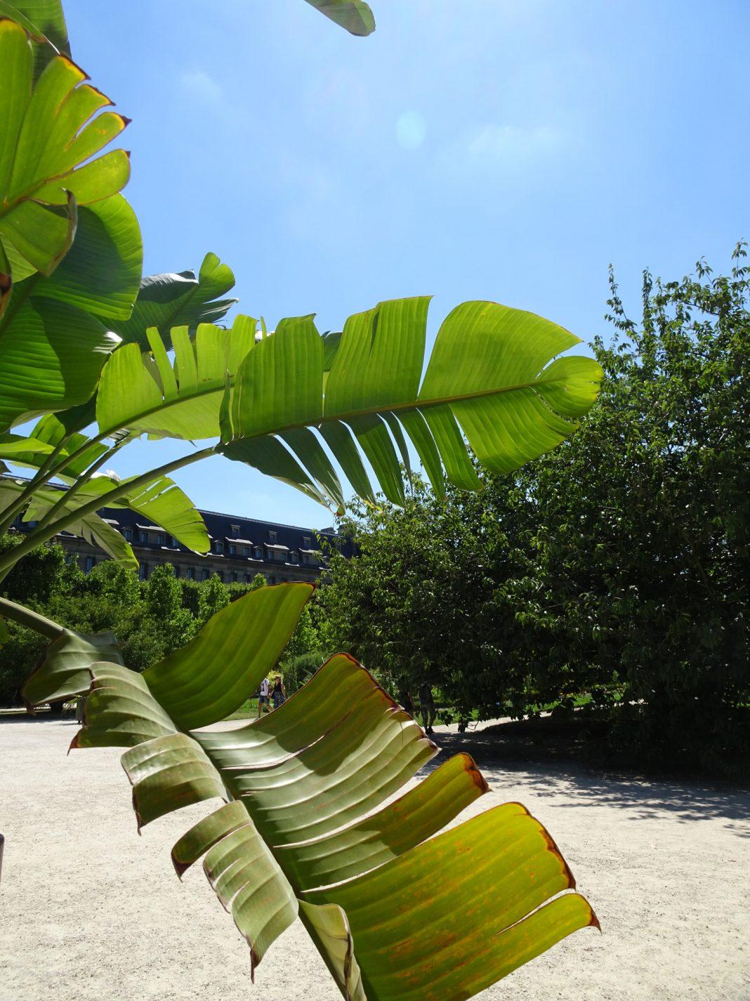 Exotische planten in Jardin des Plantes