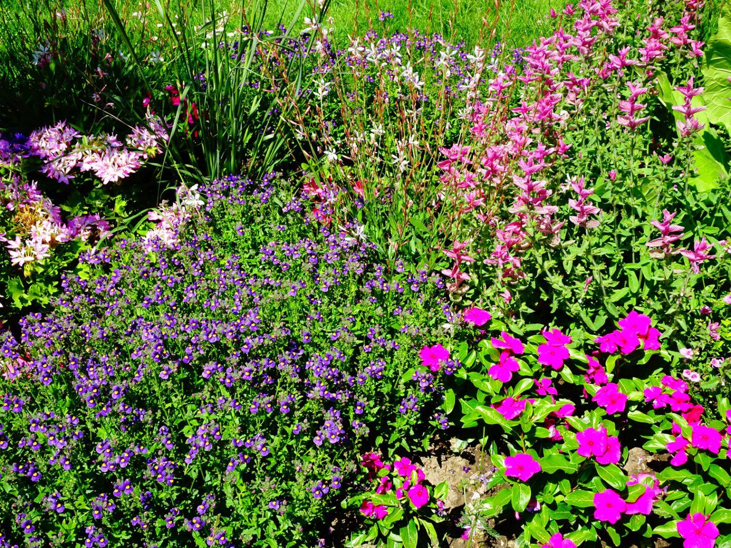 Kleurrijke bloemen in le Jardin des Plantes