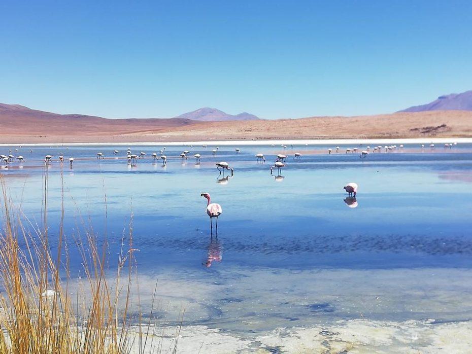 Rondreis Bolivia: dit moet je zien en doen in Bolivia