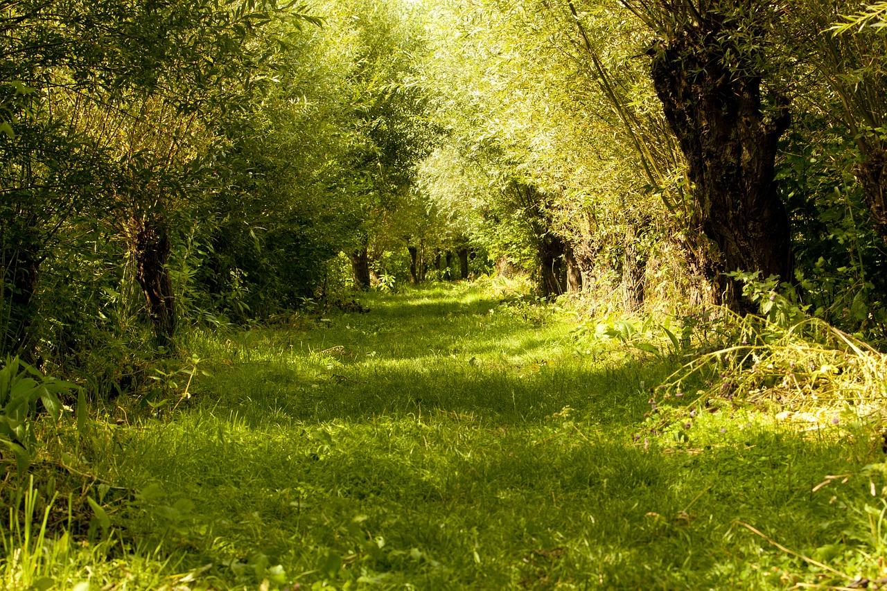 De Biesbosch - Favoriete natuurgebieden van Nederland & België