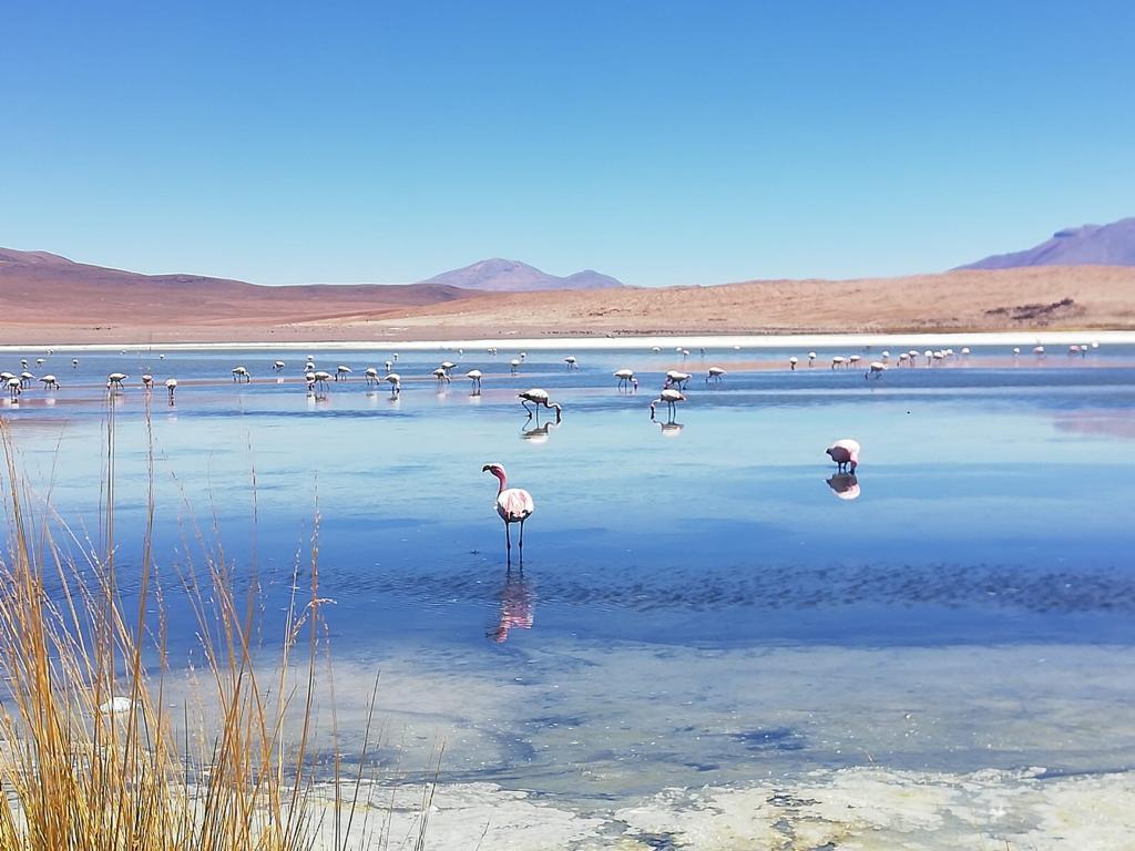 Flamingo's op de meren in Bolivia