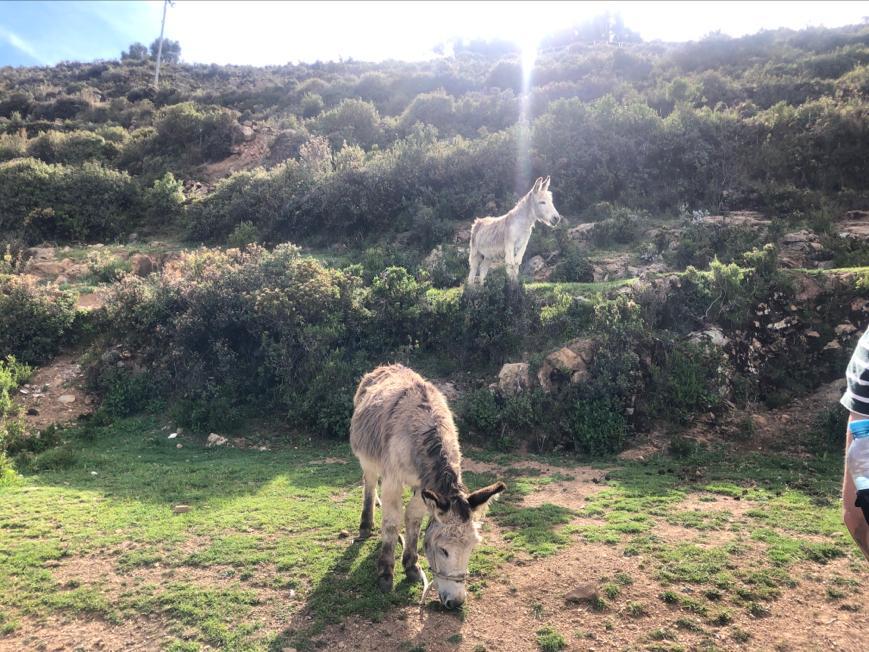 Ezels op Isla del Sol