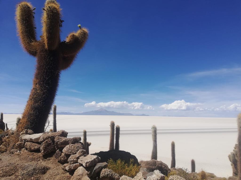 Vanaf boven het cactusseneiland