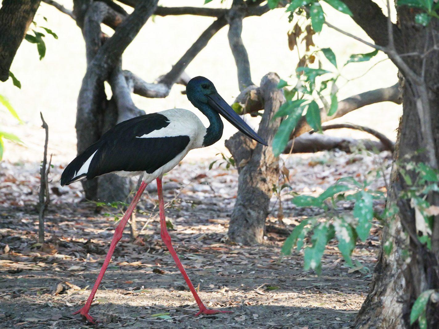 De Jabiru - Kakadu National Park