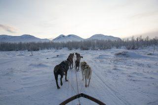 Voigt Travel Online Winterevent
