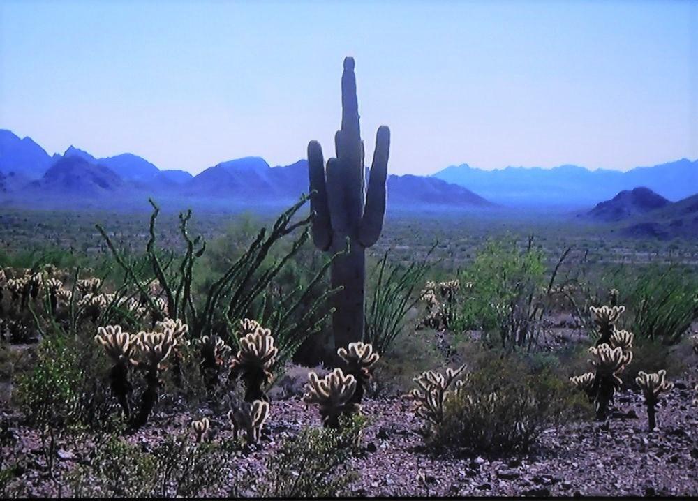 Cactussen in alle vormen en maten