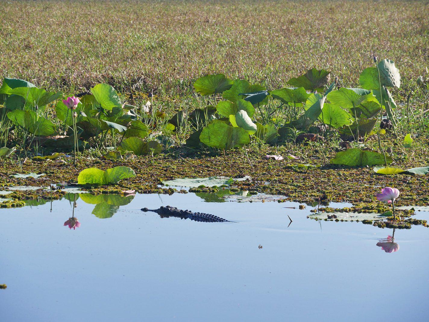 Krokodillen drijven naast onze boot