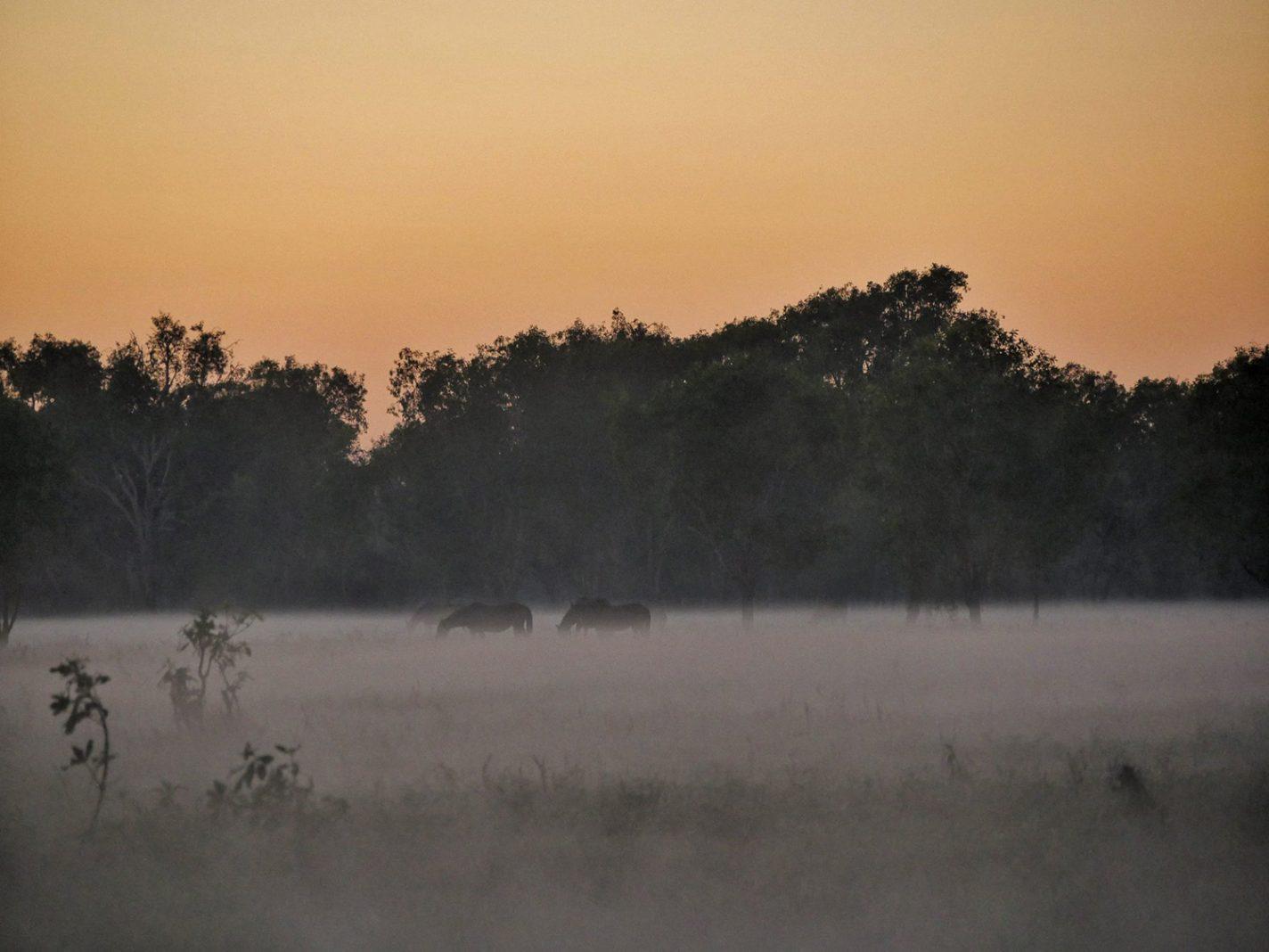 Paarden in de mist - Kakadu National Park