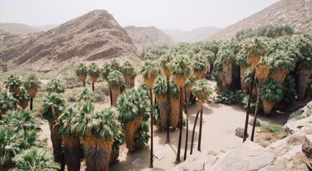 Palm Oasis - Californië