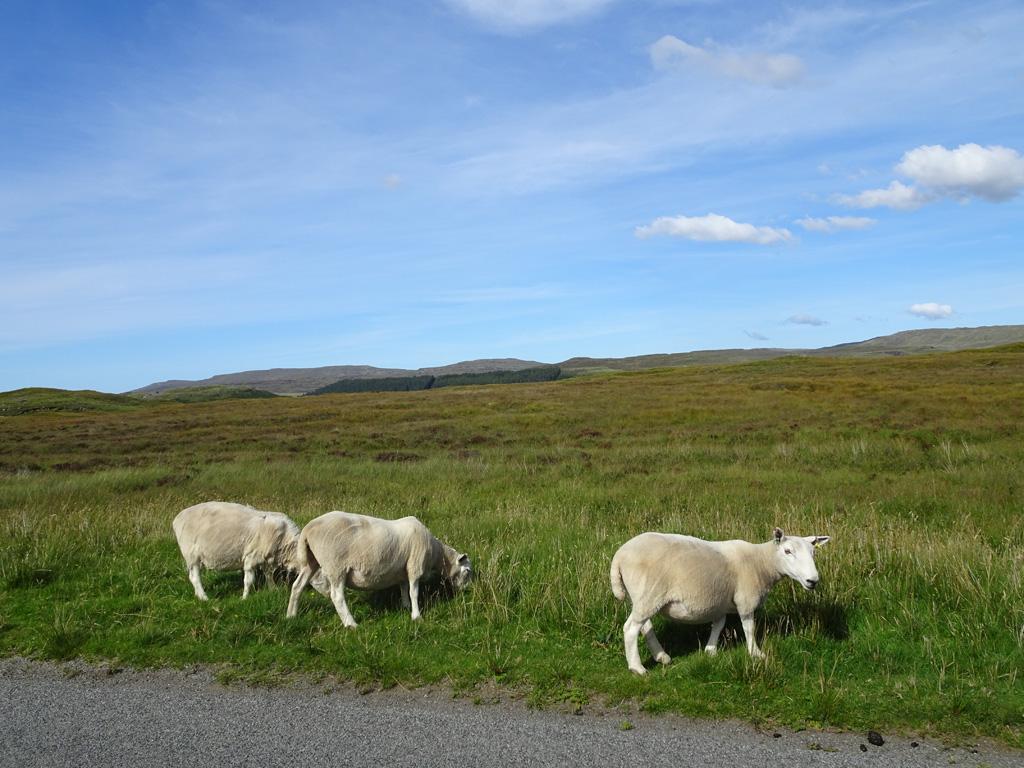 De inwoners van Skye