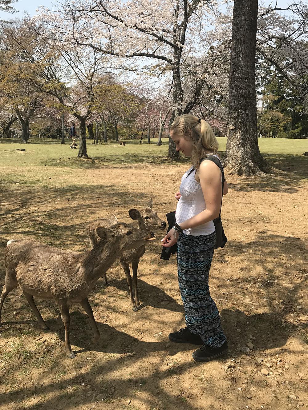 Wat te doen in Japan? Hertjes voeren in Nara