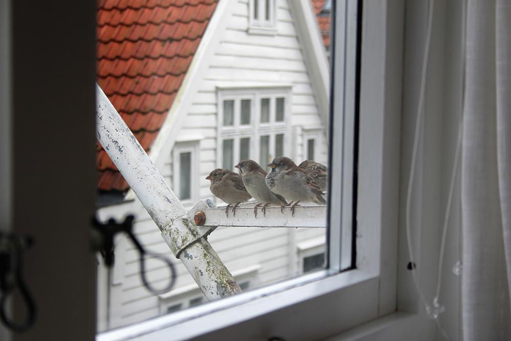 Elke ochtend zaten (tientallen!) musjes er klaar voor