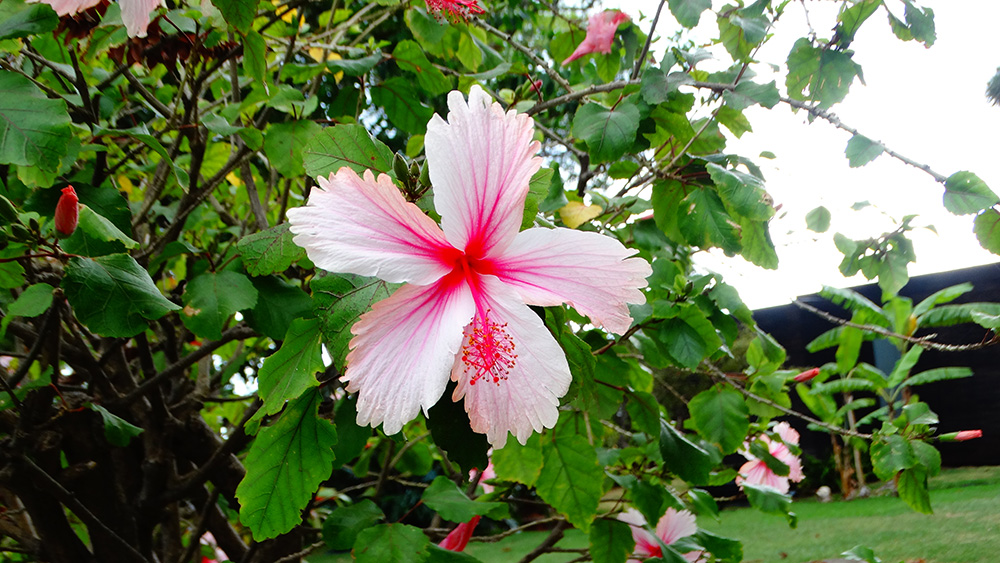 De prachtige flora op Madeira