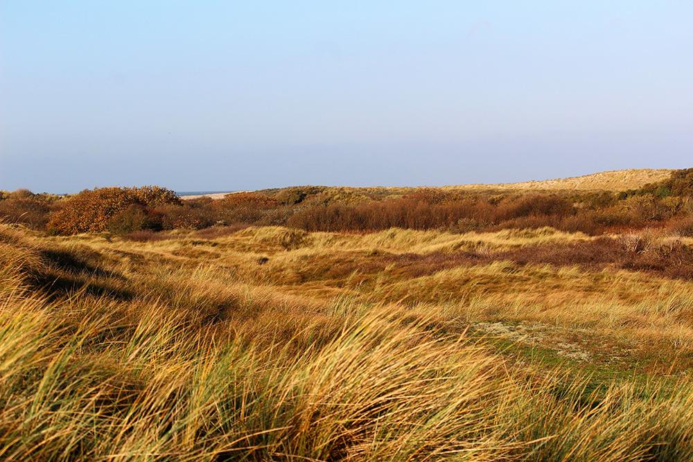 Herfstkleuren op Ameland rond Ballum met op de achtergrond de Noordzee