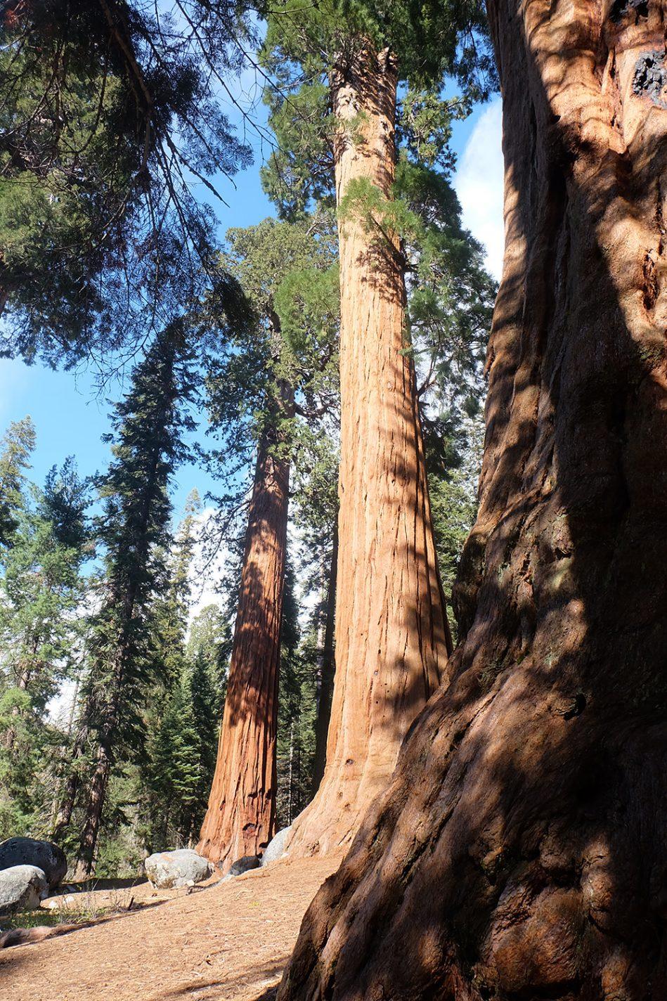 Sequoia National Park - West-Amerika