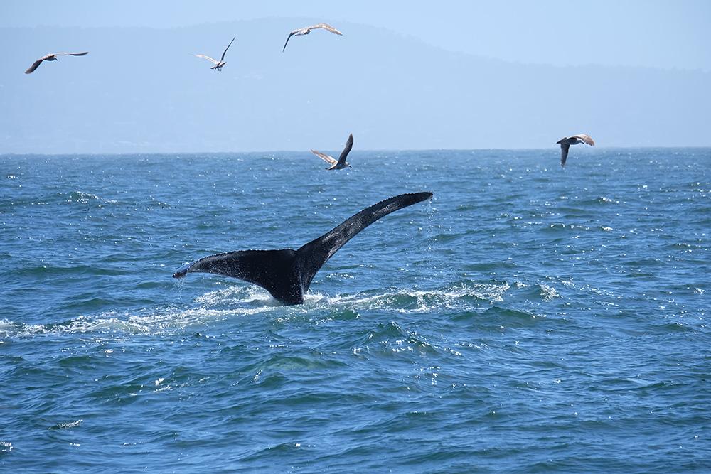 Spelende walvissen