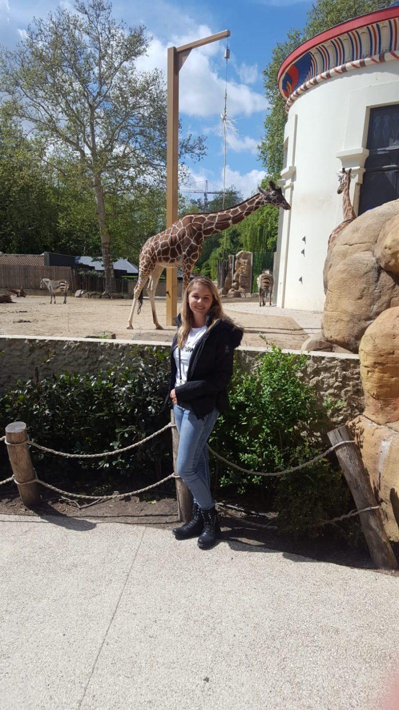 Giraffen in Antwerpen Zoo