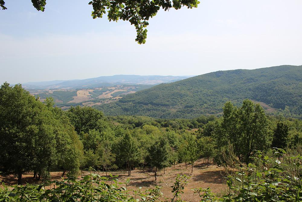 Uitzicht vanaf Podere Lama
