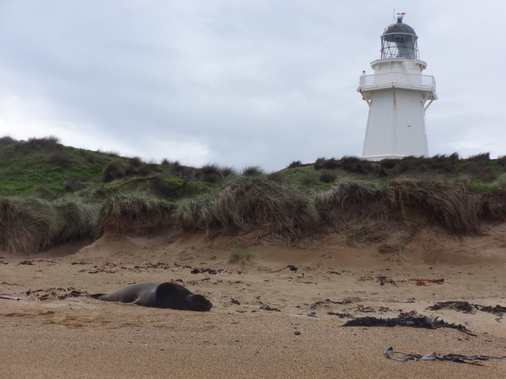 Zeeleeuwen spotten bij The Catlins - Zuidereiland