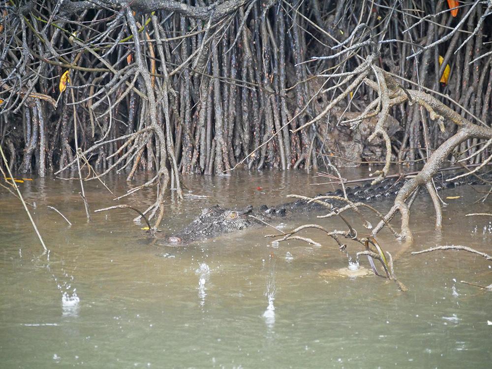 De krokodil hield ons goed in de gaten