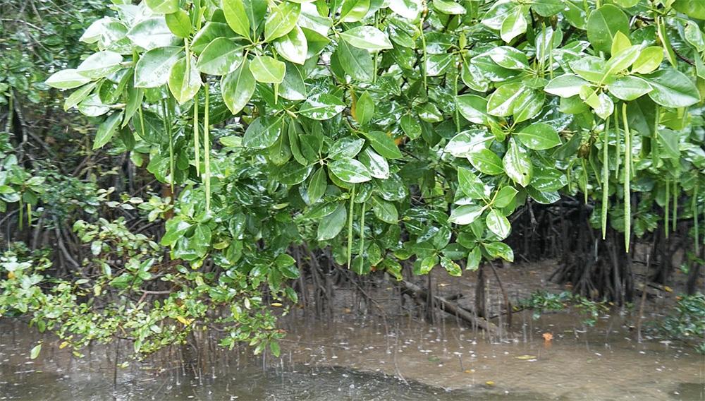Veel bomen langs de kant met bijzondere vruchten