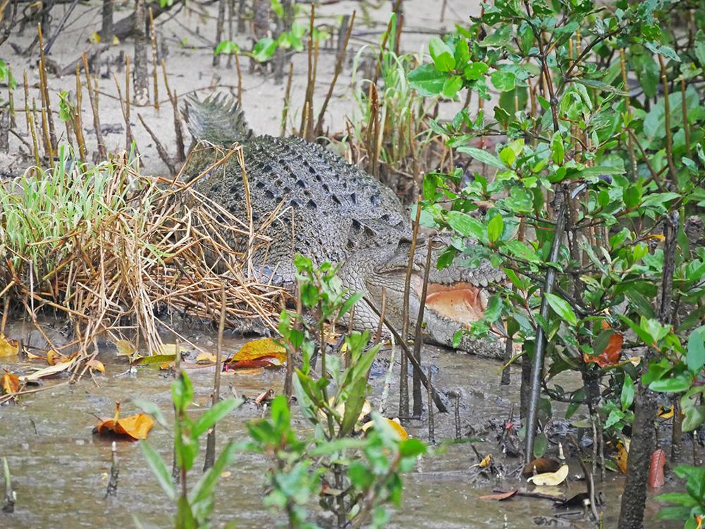 En nog een close up van de krokodil
