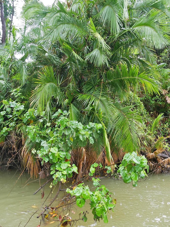Allerlei soorten tropische planten en bomen passeerden wij