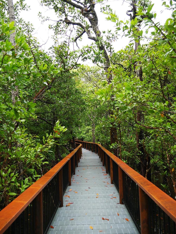 Loopbruggen over het water - Marrdja Boardwalk