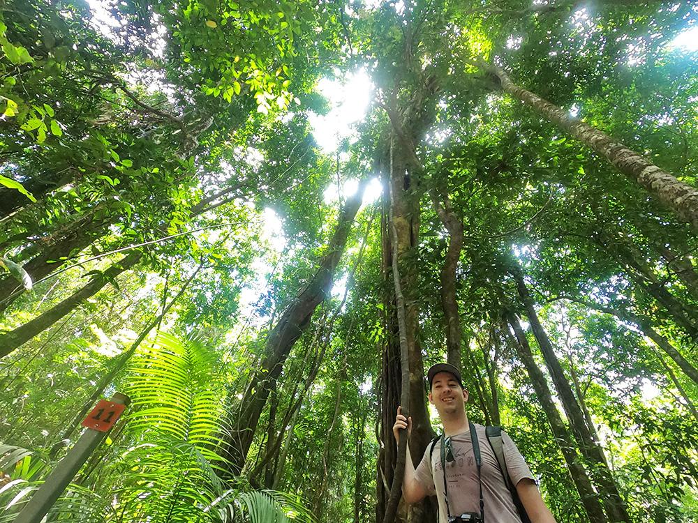 In het regenwoud voel je je erg klein - Mossman Gorge