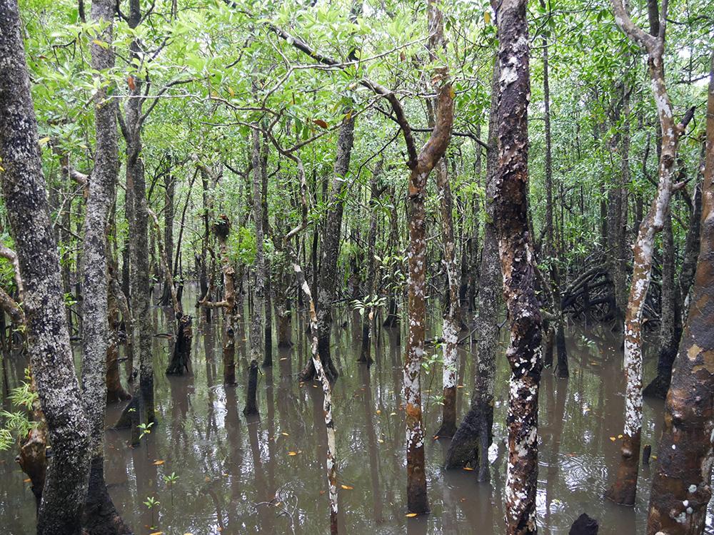 In het regenseizoen staat het water tussen de bomen hoog