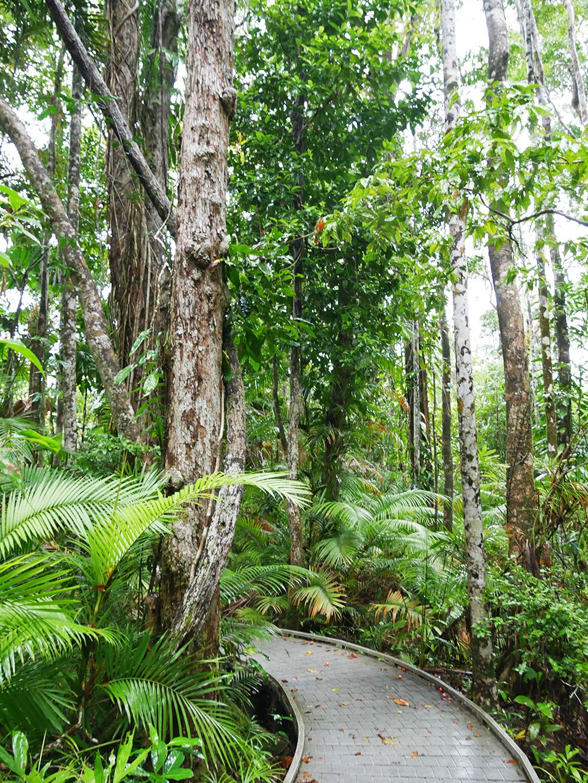 Dwars door het regenwoud