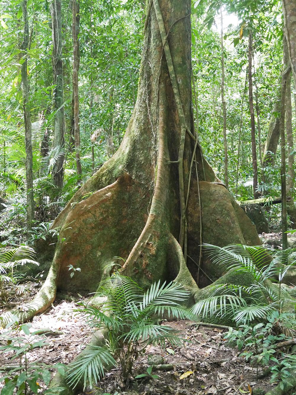 Een hele bijzondere boom