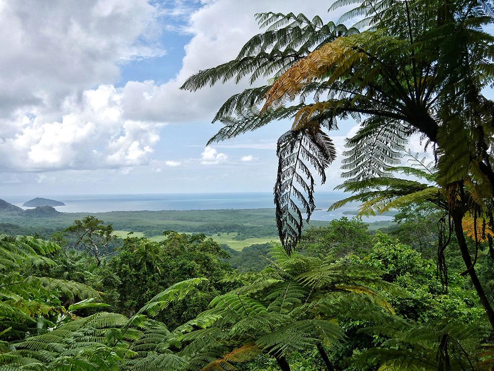 Walu Wugirriga Alexandra lookout - Cape Tribulation