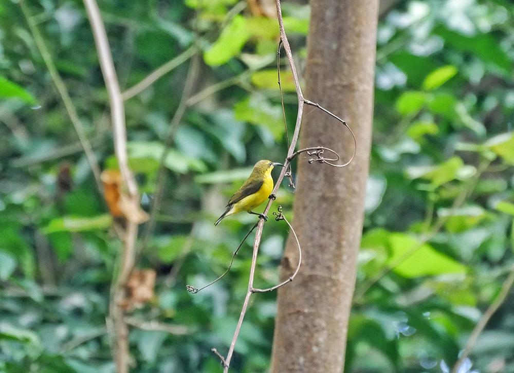 Toch nog een mooie vogel gespot in het regenwoud