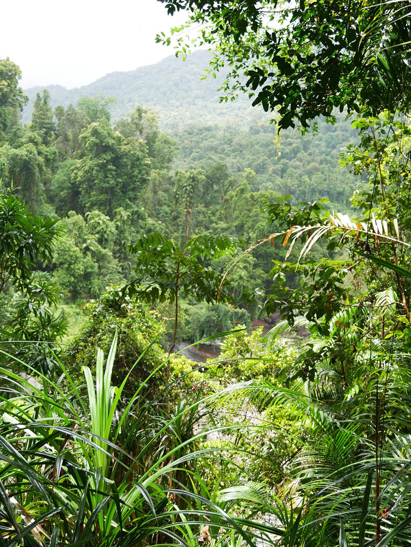 En nog een schitterend uitzicht over het regenwoud