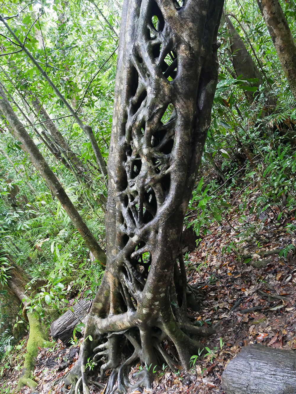 Hele bijzondere boom