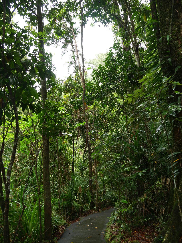 Wandelen door het groene regenwoud