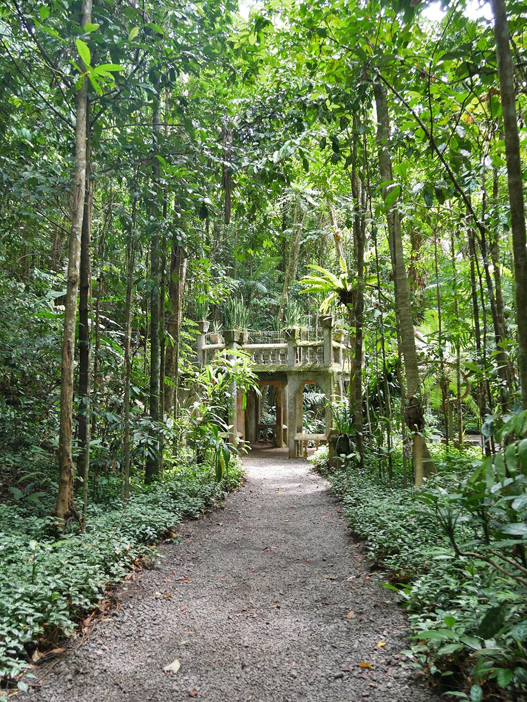 Midden in het regenwoud