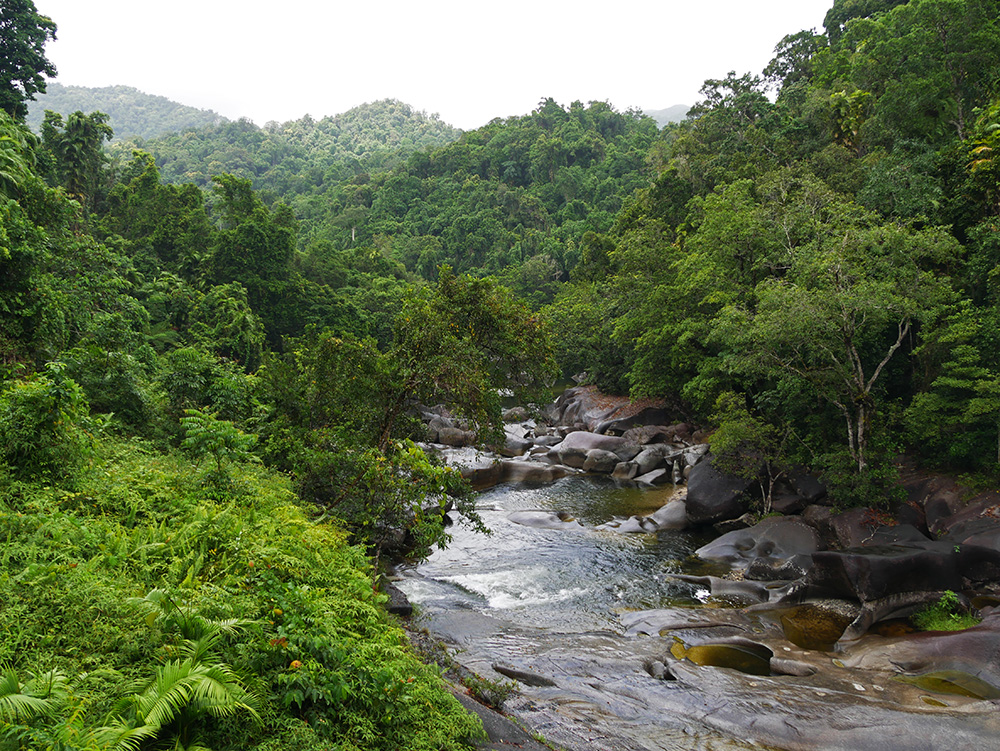 Stromend water in een zeer groene omgeving