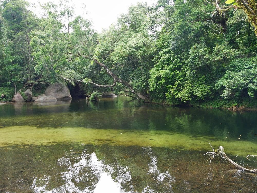 Een deel van de grote waterpoel