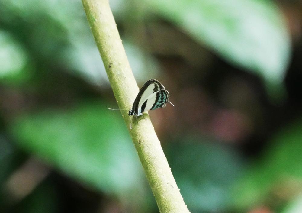 Mooie vlinder gespot