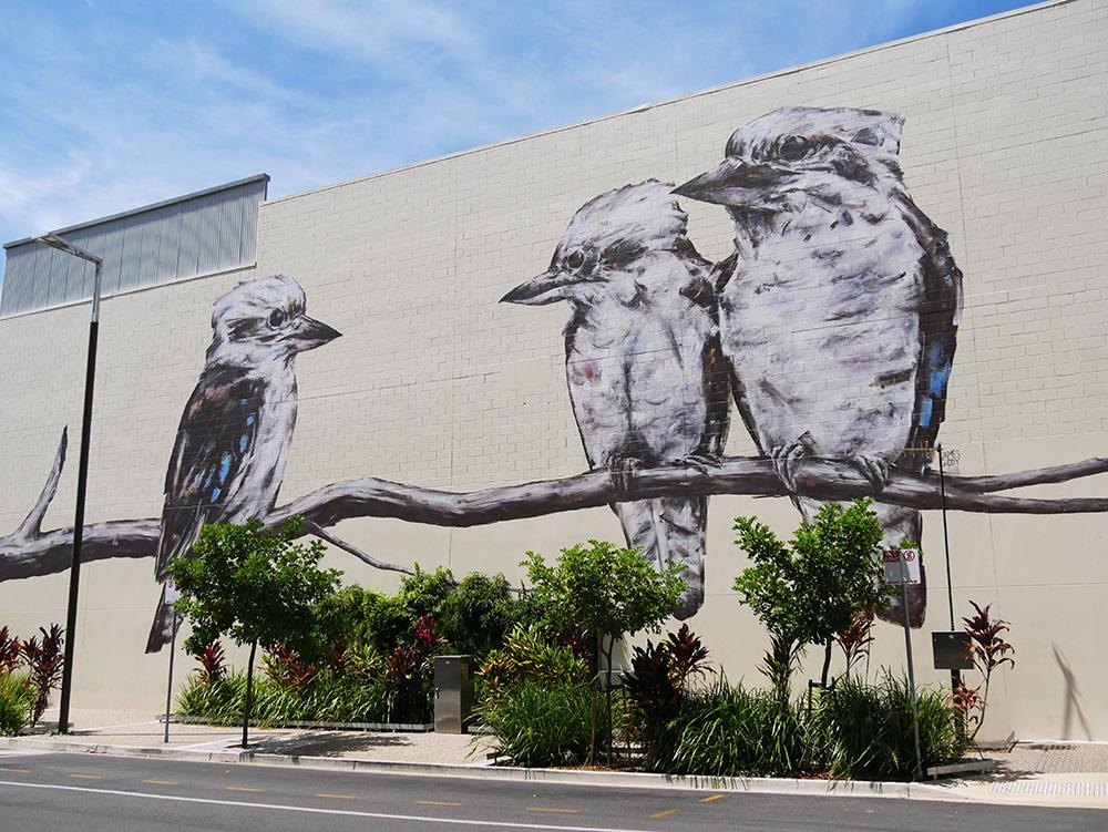 3 kookaburra's op een tak
