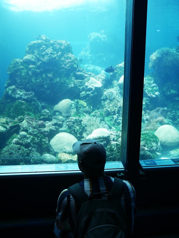 Martin geniet van alle mooie vissen in het aquarium - Townsville