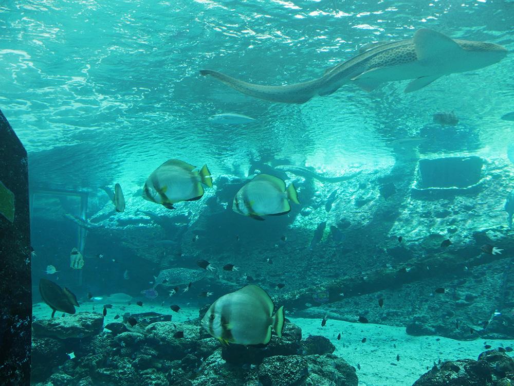 Mooie tropische vissen zwemmen rond
