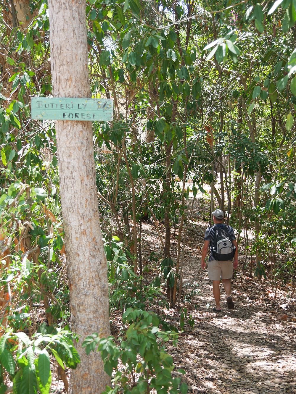 Wandeling door Butterfly Forest - Magnetic Island