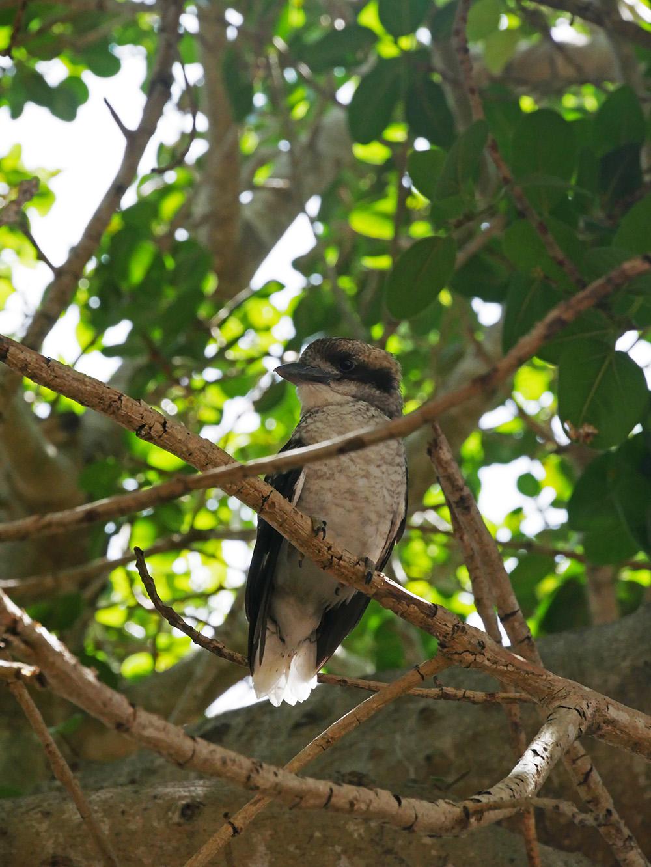 Weer een mooie vogel in de bomen