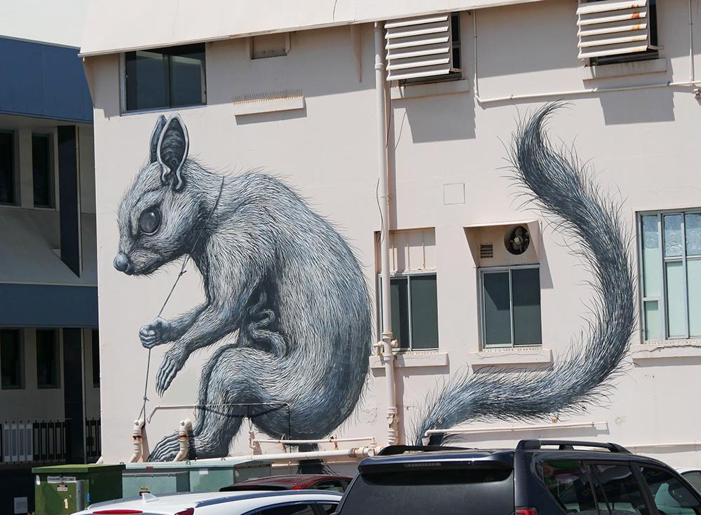 Een eekhoorn op een pand - Townsville