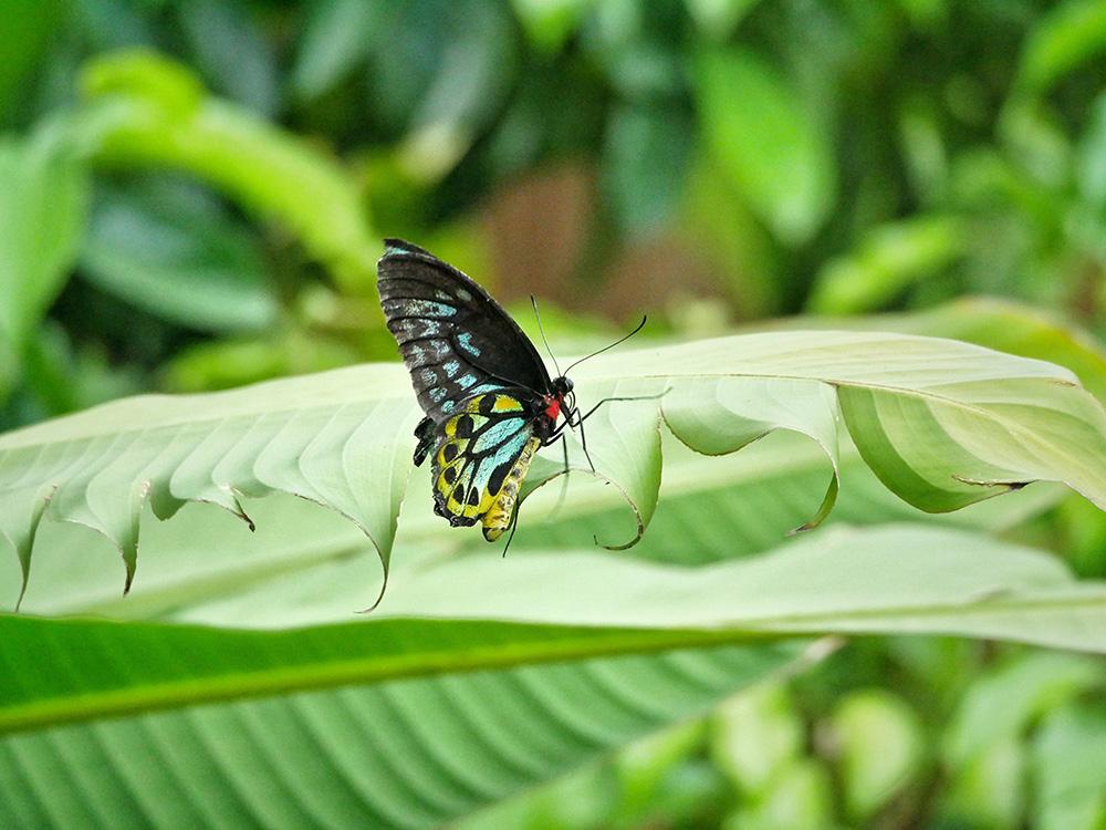 Een mooie gekleurde vlinder in ons tuintje bij de cottage - Magnetic Island