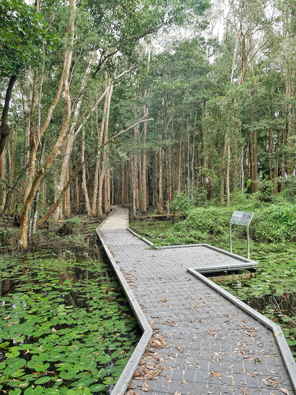 Door de verhoogde aangelegde wandelpaden krijg je geen natte voeten - Woodlands to Water Lilies Walk