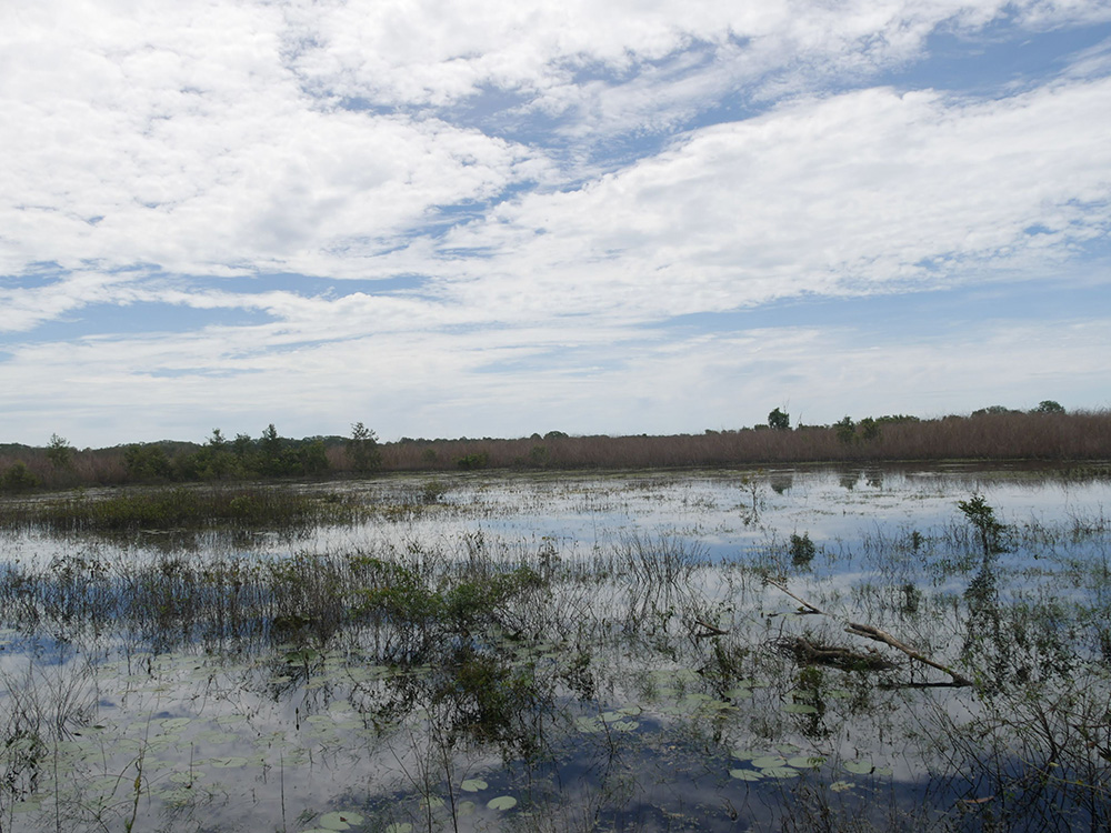 De spiegeling van de lucht in het water is echt prachtig - Woodlands to Water Lilies Walk